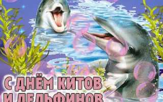 Поздравления с днем китов и дельфинов
