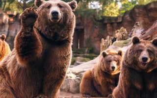Поздравления с днем пробуждения медведя