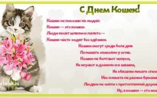 Стихи поздравления с днем кошек