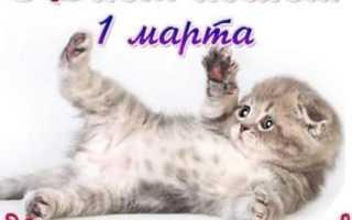 Прикольные поздравления с днем кошки